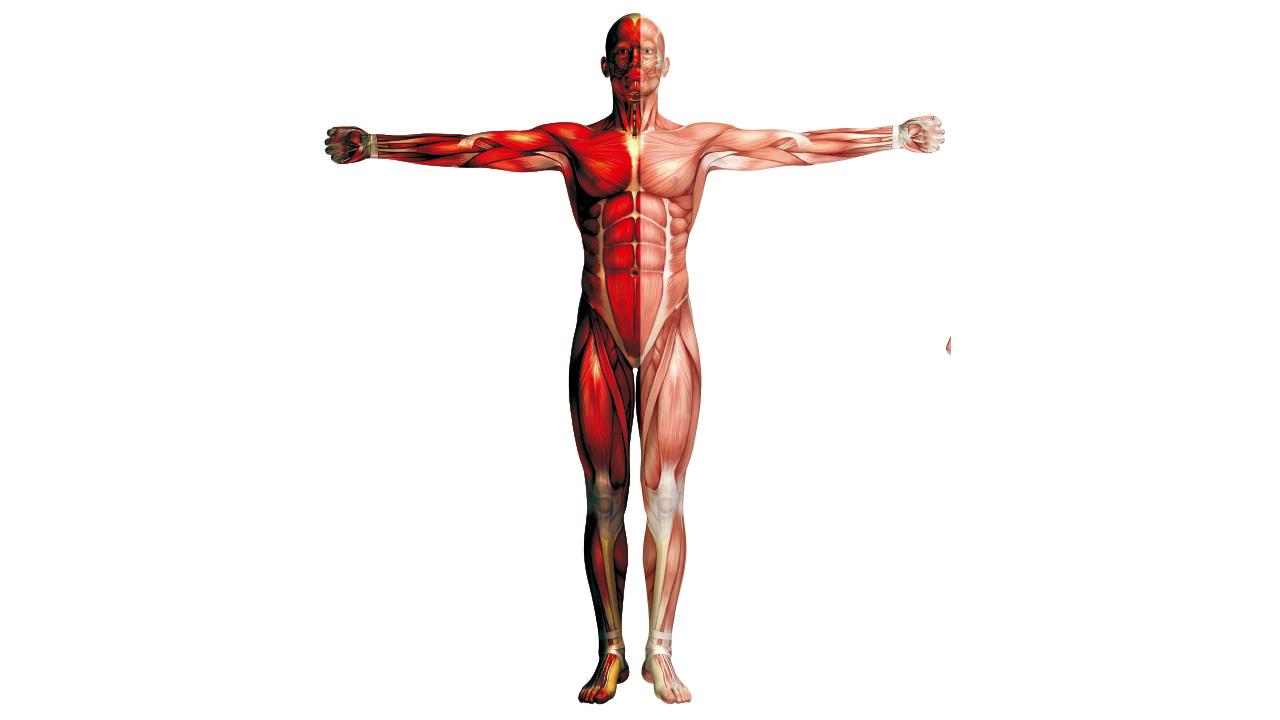 Hemiplejía (Parálisis de la Mitad del Cuerpo) - Laboratorios Bagó